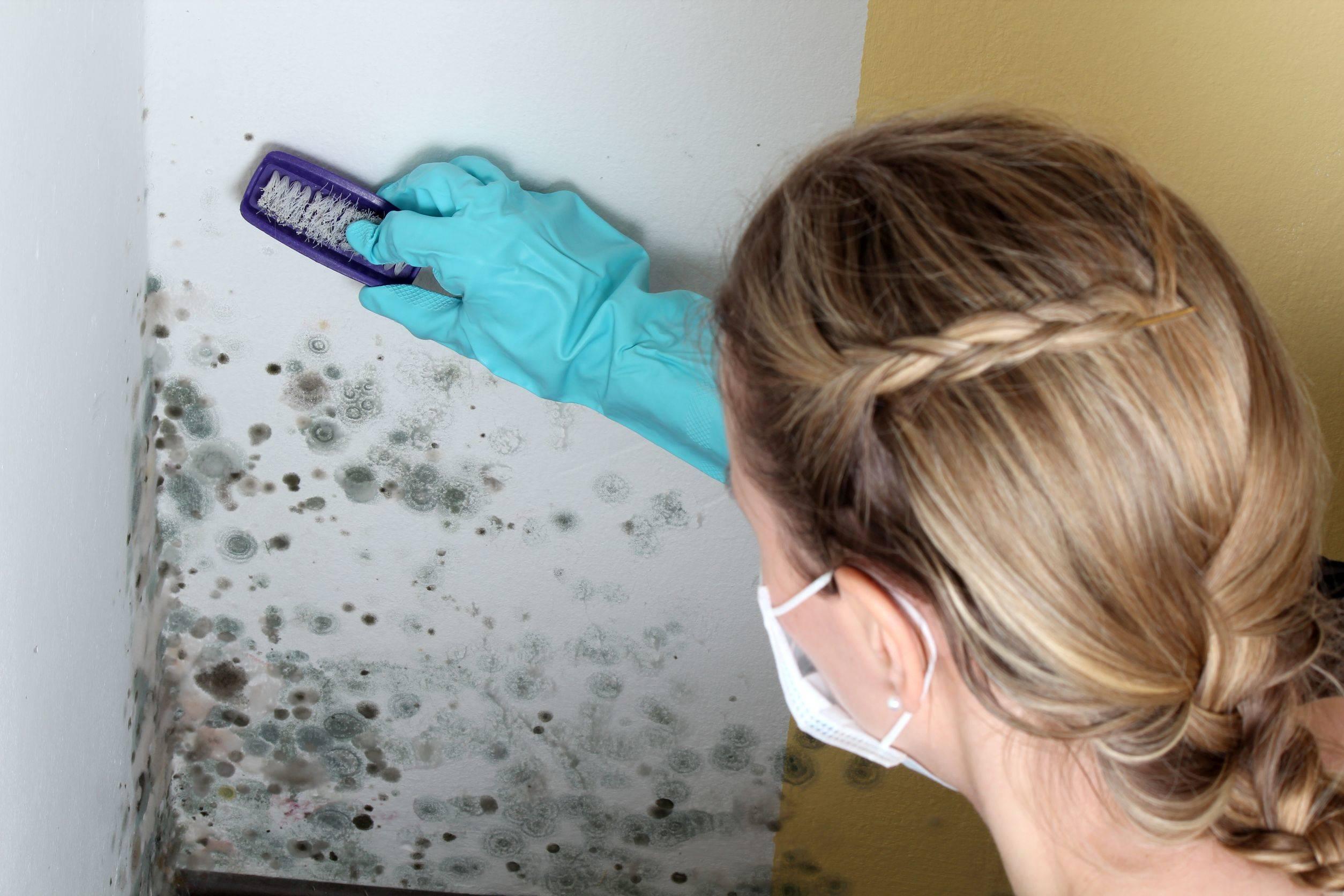 Как убрать плесень в ванной комнате на стенах своими руками 8