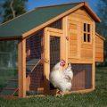 Куриный домик